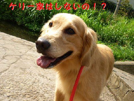 c_20120814072339.jpg
