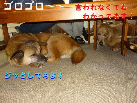 d_20120511071511.jpg