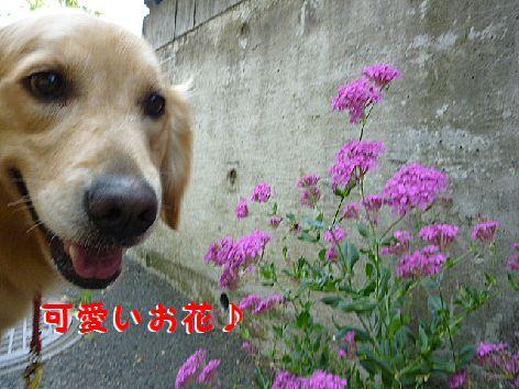 d_20120529073522.jpg