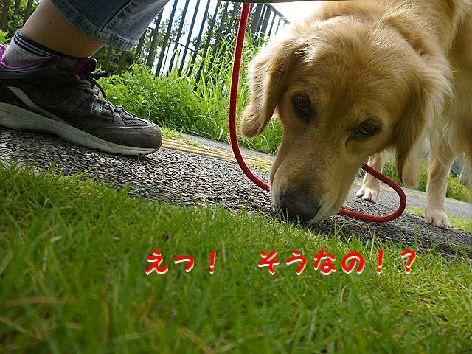 d_20120720073650.jpg