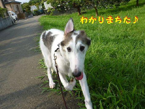 d_20120810073225.jpg