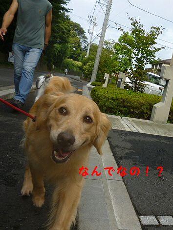 d_20120811090122.jpg