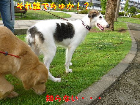 d_20120814072339.jpg