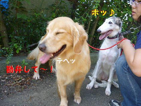 d_20120823073648.jpg