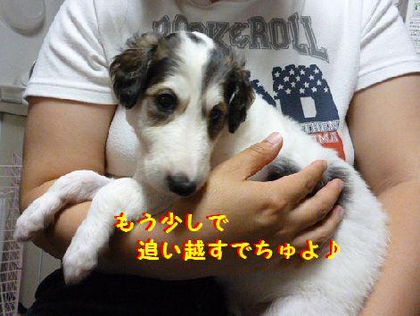 e_20120524065333.jpg