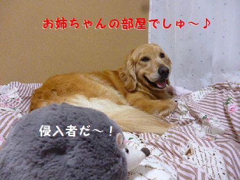 e_20120525070925.jpg