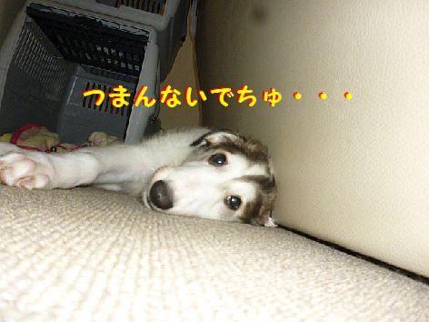 e_20120623093139.jpg