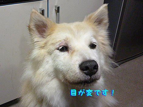 e_20120723073635.jpg