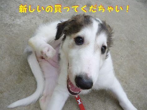 f_20120616101551.jpg