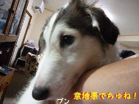 f_20120620071025.jpg