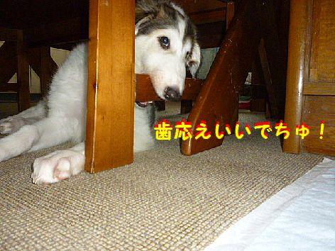 f_20120623093205.jpg