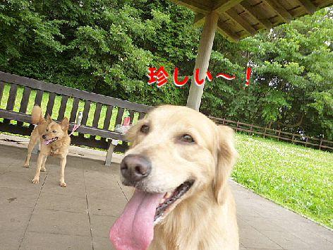 f_20120630081214.jpg