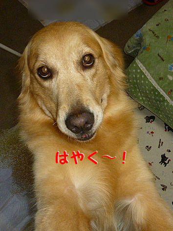 f_20120728100626.jpg