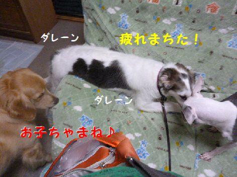 f_20120810073225.jpg