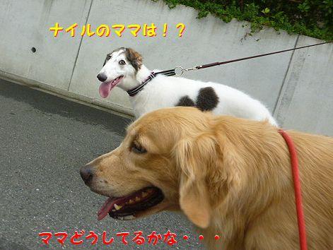 f_20120811090134.jpg