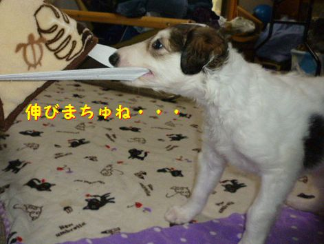 g_20120531071756.jpg