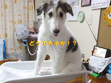 g_20120616101750.jpg