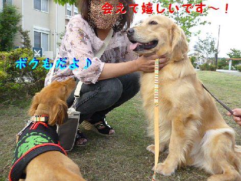 h_20120524065400.jpg
