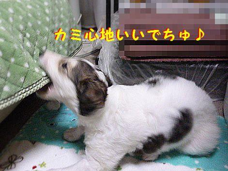 h_20120529073538.jpg