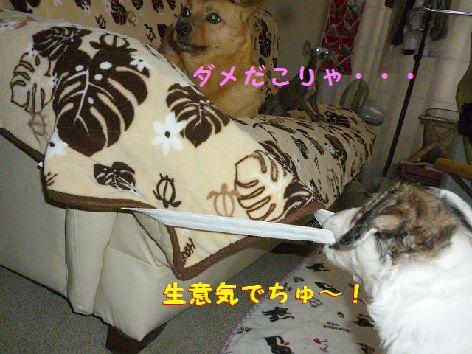 h_20120531071755.jpg