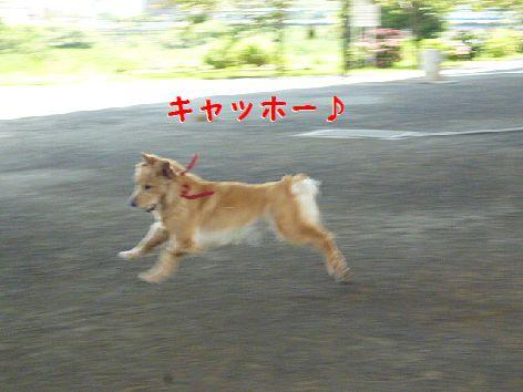 h_20120710072236.jpg