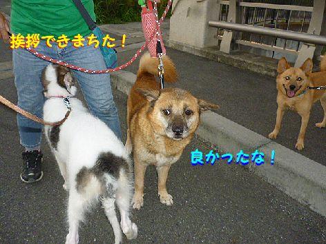 h_20120718073053.jpg