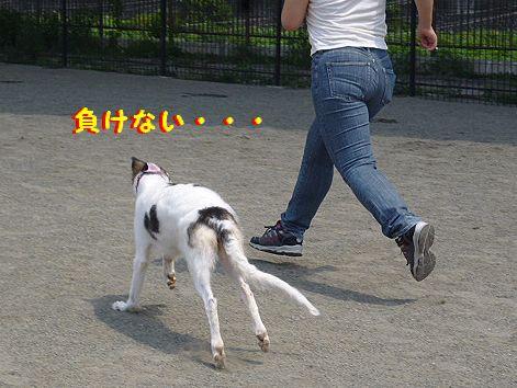 h_20120818095521.jpg