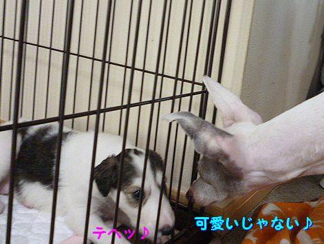 i_20120520072736.jpg