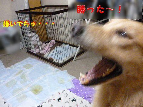 i_20120703071313.jpg