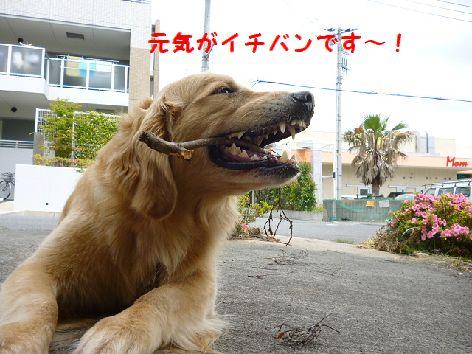 j_20120531071754.jpg