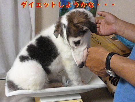 j_20120629094946.jpg