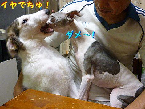 j_20120709072312.jpg