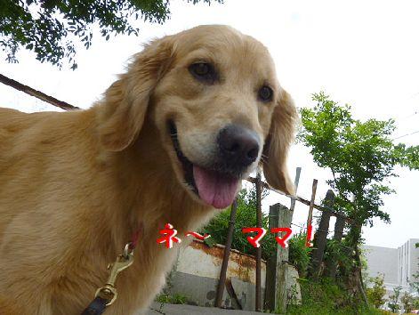 k_20120531071753.jpg