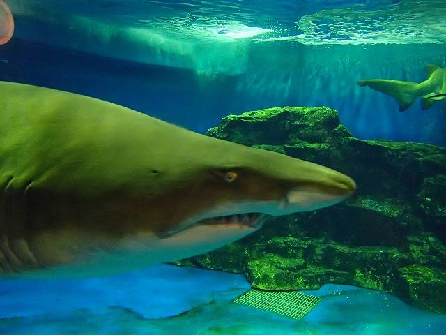 shark_eye