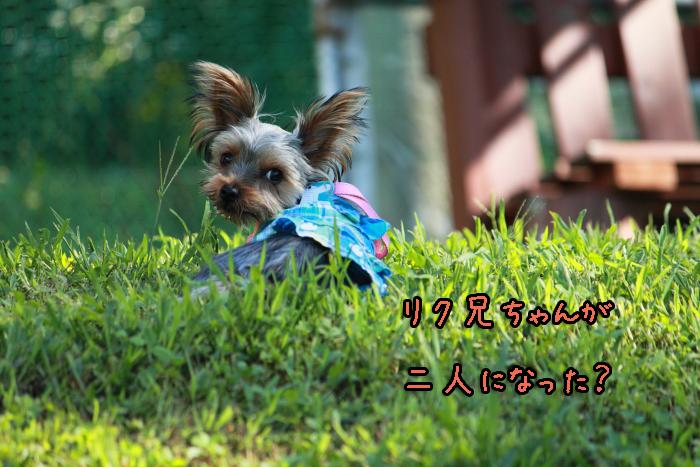 12-20120909-021.jpg