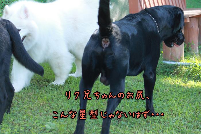 15-20120909-015.jpg