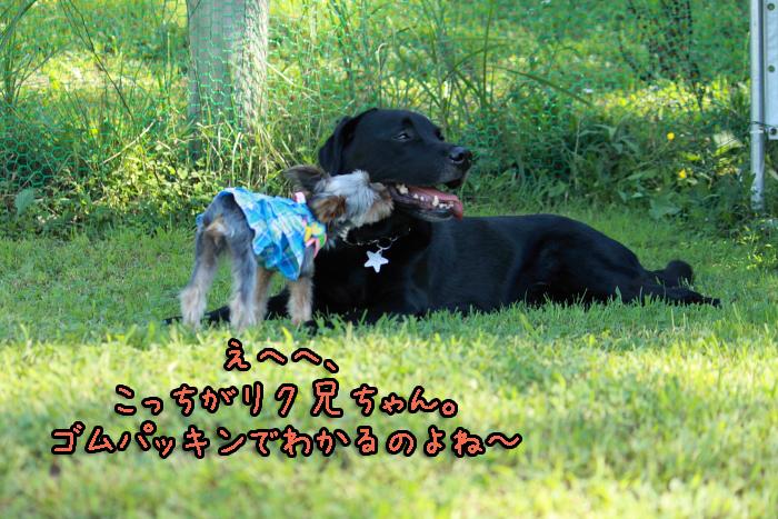 16-20120909-010.jpg