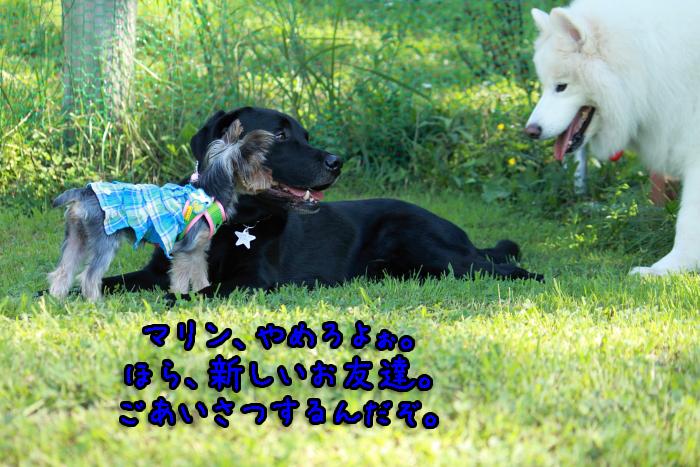 17-20120909-011.jpg
