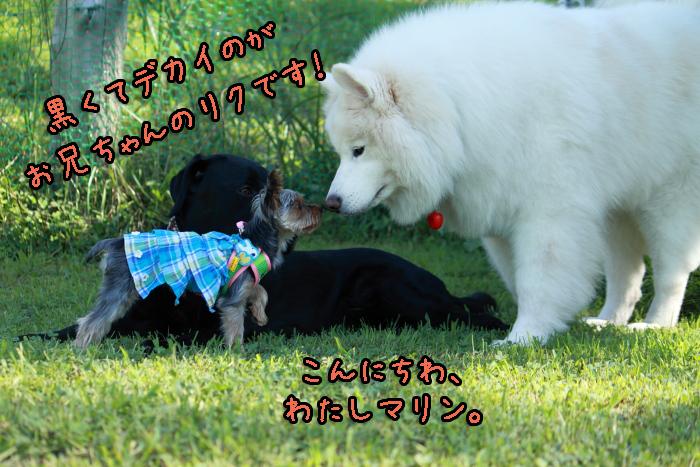 18-20120909-013.jpg