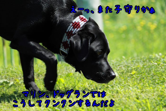 2-20120909-004.jpg
