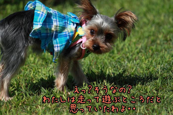 3-20120909-001.jpg