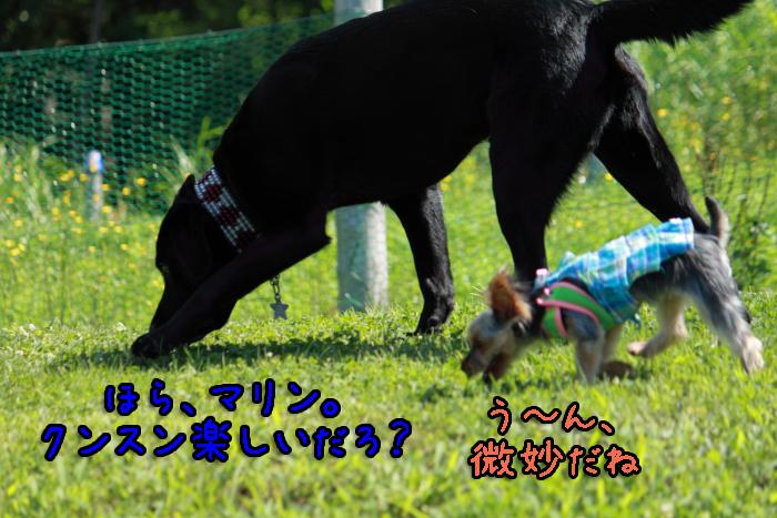 5-20120909-002.jpg