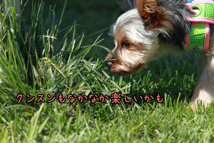 6-20120909-006.jpg