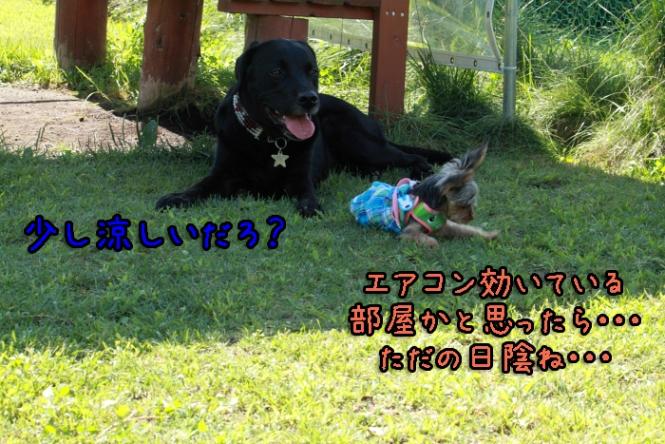 8-20120909-009.jpg