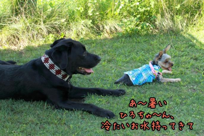 9-20120909-008.jpg