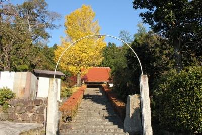 安養寺の銀杏3
