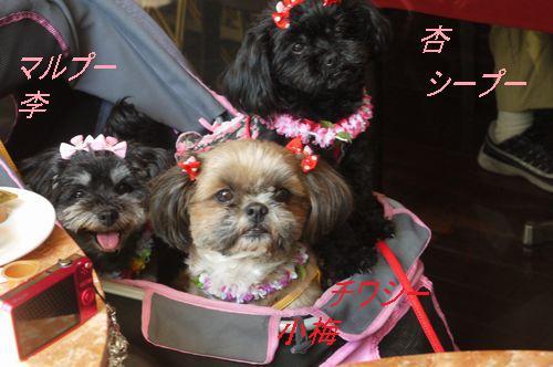 杏家3姉妹