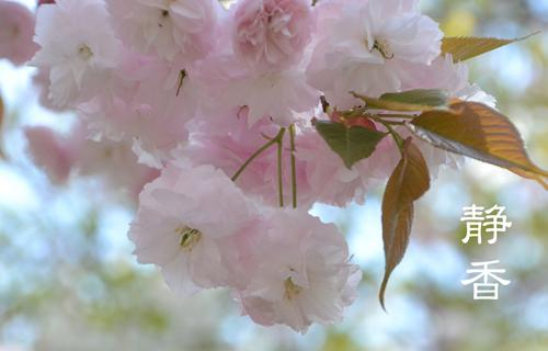 201204osaka_1348.jpg