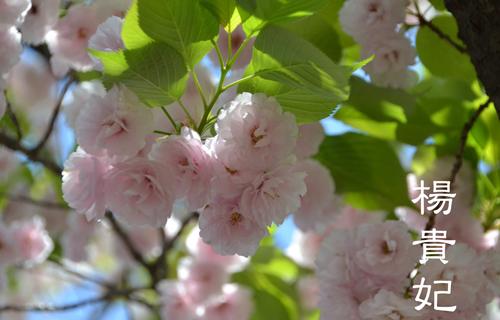 201204osaka_1351.jpg