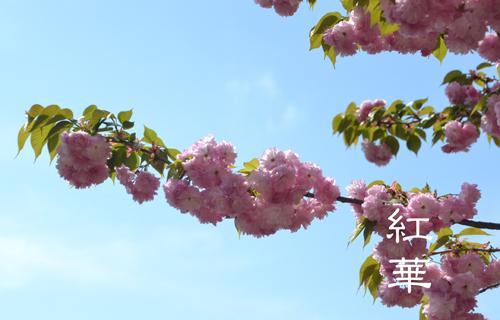 201204osaka_1406.jpg